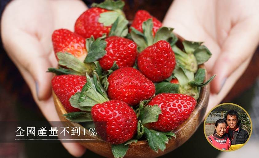 追求完美-有機轉豐香草莓